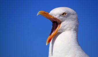 5 reasons birds win at life