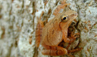 What frogs can teach us about enduring hardship